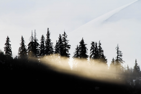 A ray of light piercing through the forest