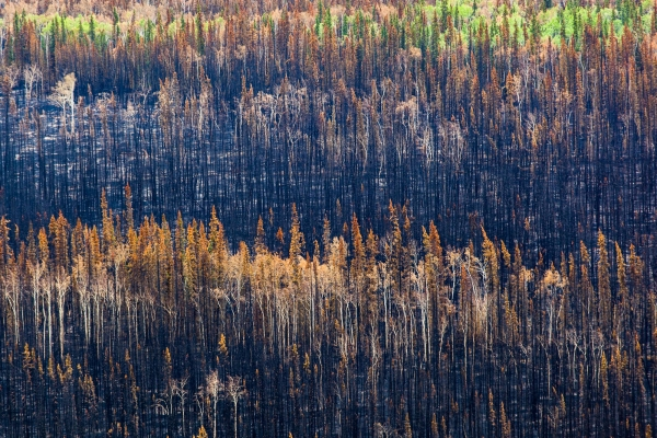 After a Forest Fire (Yukon, Canada)
