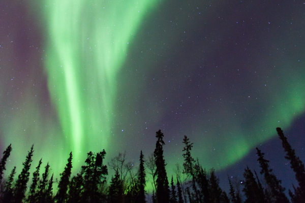 Northern Lights above the boreal forest