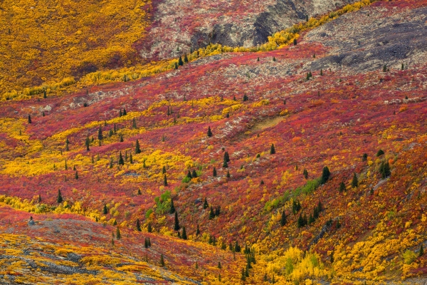 Fall colors at its best in Tombstone Territorial Park