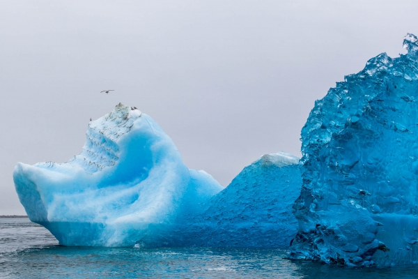 Crystal blue iceberg floating in Tracy Arm