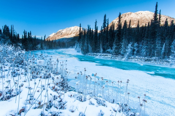 Frozen Wheaton River in Winter (Yukon, Canada)