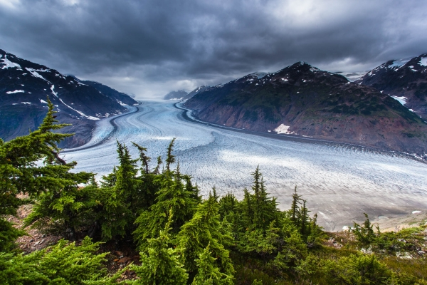 Hemlock trees overlooking Salmon Glacier (British Columbia, Canada)