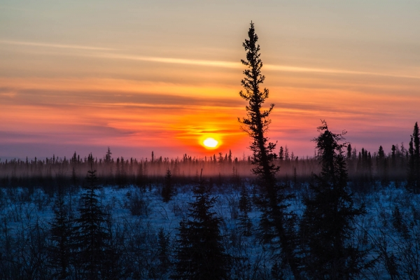 Winter Sunset on the Boreal Forest (Northwest Territories, Canada)