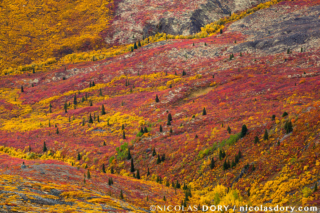 A patchwork of Fall Colors